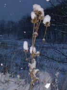 """Cotton Flowers"" - Bulgaria, Winter 2007"