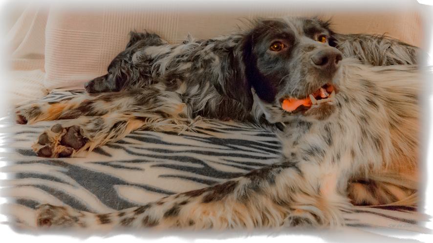 Couchdogs, Hunde im Glück :-)