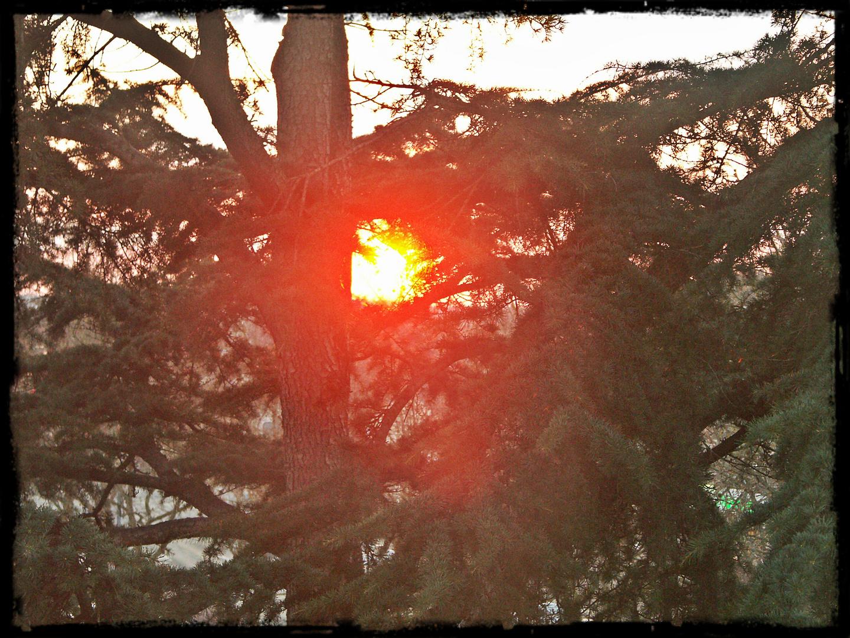 Couché de soleil dans les arbres angevins