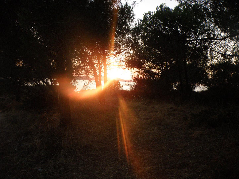 Couché de soleil entre les arbres