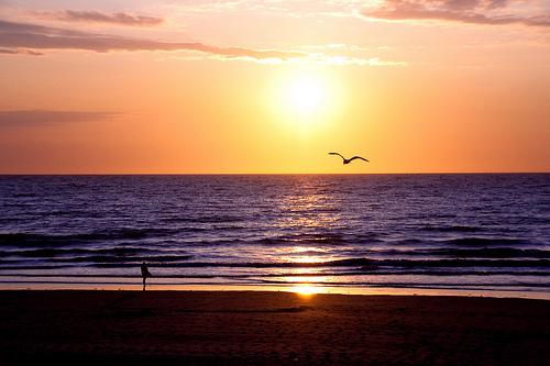 Couché de soleil, surfer et mouette au vent ...