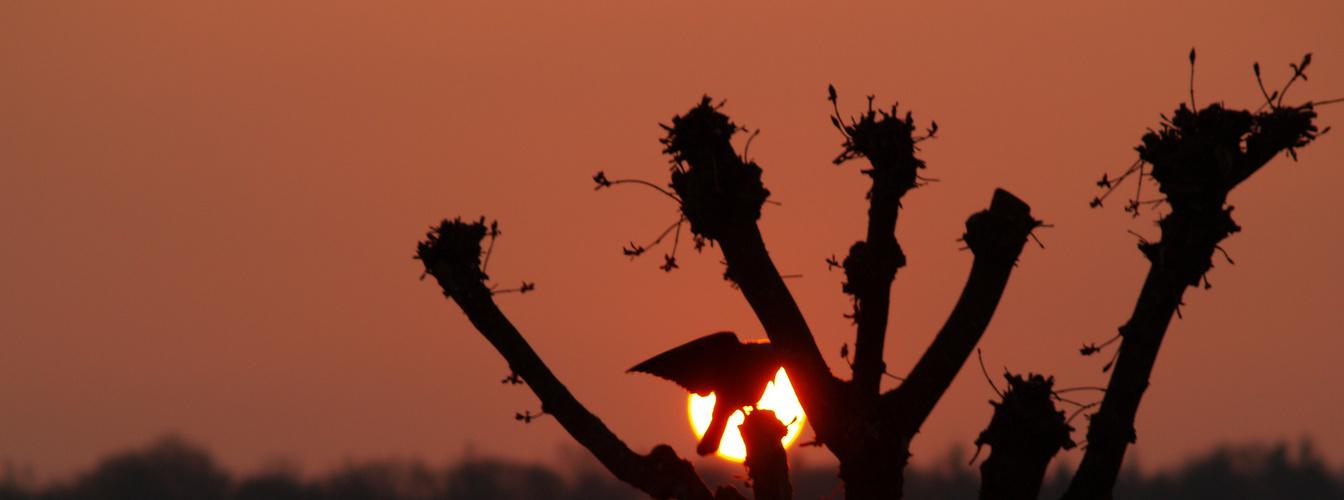 coucher de soleil avec un corbeaux