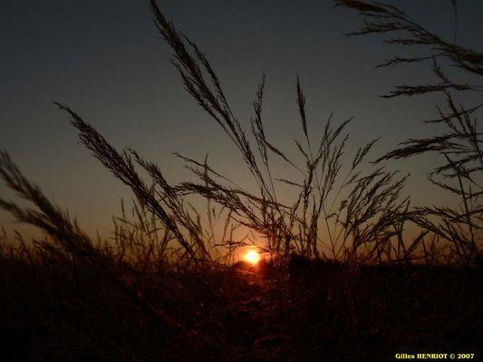 Coucher de soleil dans les champs.