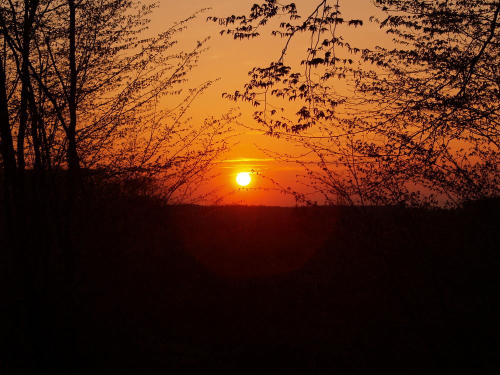 coucher de soleil en foret