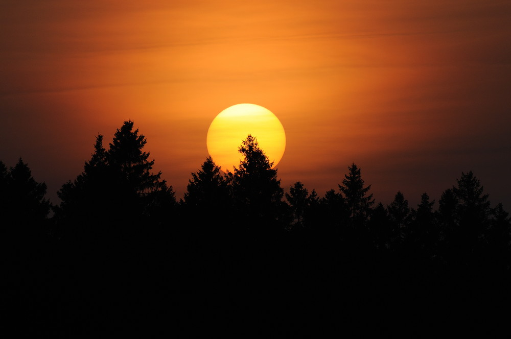 Coucher de soleil en for t photo et image divers la nature simplement nature images - Culture du champignon de couche ...
