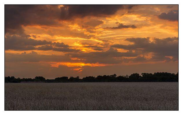 Coucher de soleil sur champ de blé
