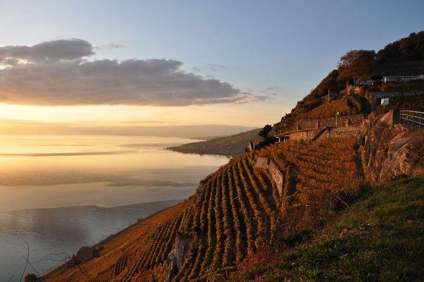 coucher de soleil sur le vignoble de Lavaux en automne