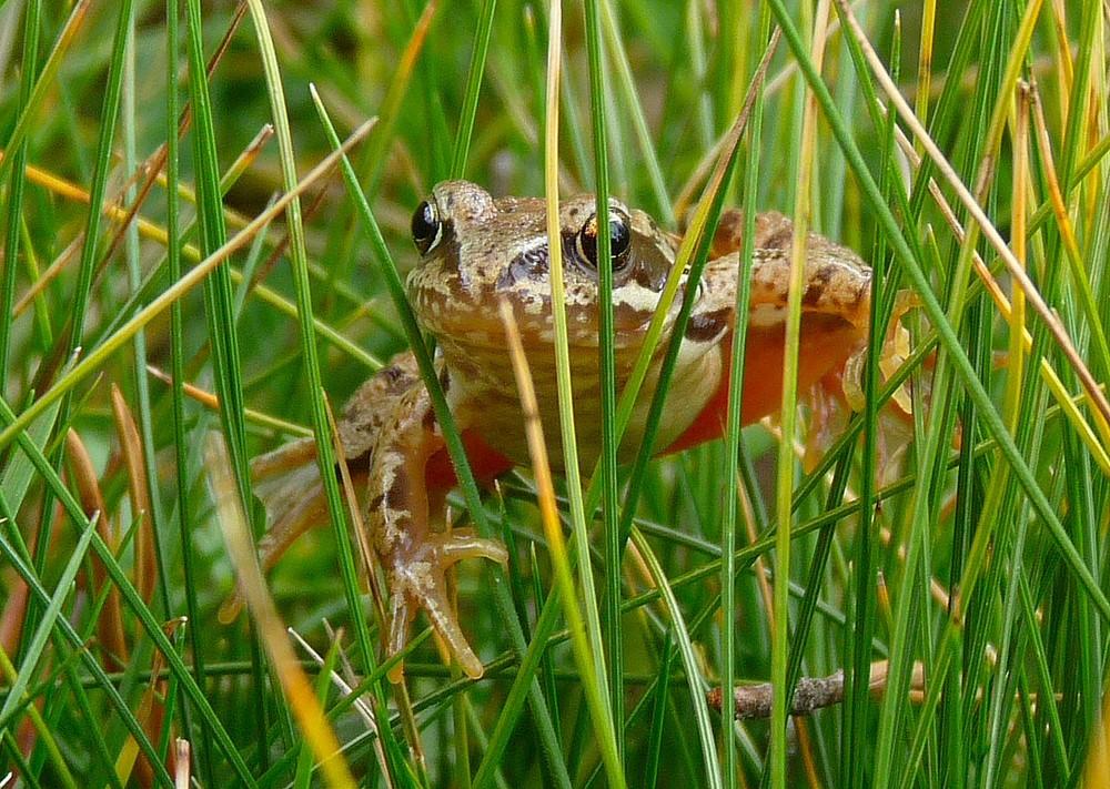 Coucou c'est la grenouille.
