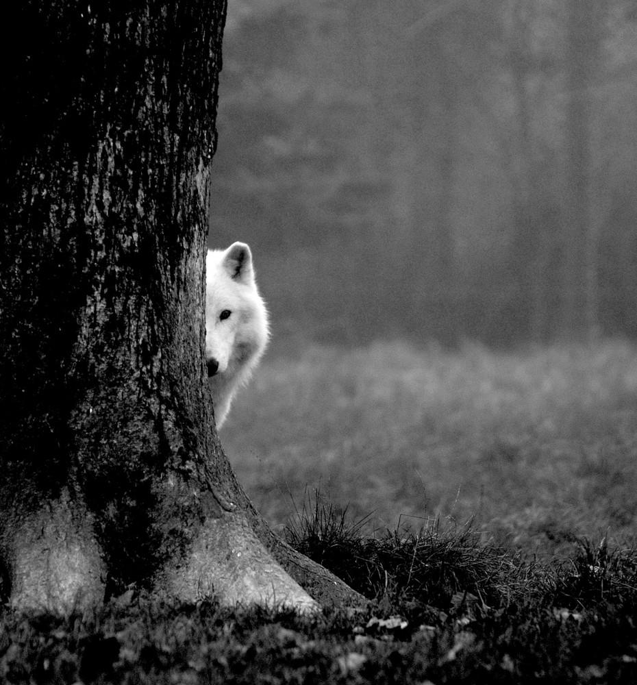 coucou, je te vois