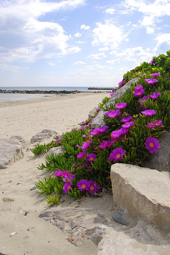 Coulée de fleurs sur la plage