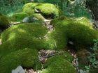 coulée verte