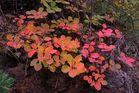 couleur d automne