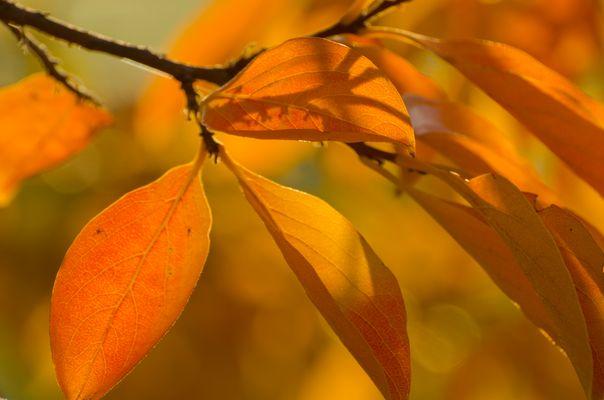 Couleur d 'automne