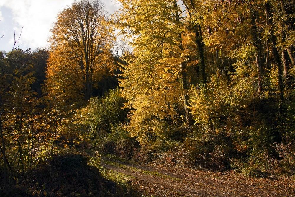 Couleur d'automne 3