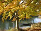Couleur d'automne sur l'Ill à la Wantzenau (Bas-Rhin)