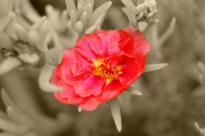 couleur de fleur