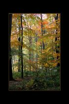 couleurs d'automne 01