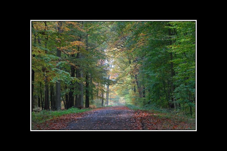 couleurs d'automne 02