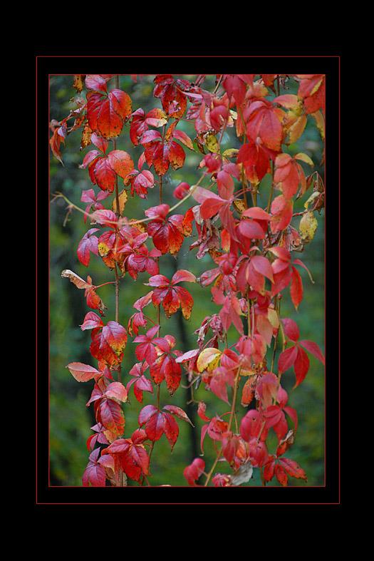couleurs d'automne 03