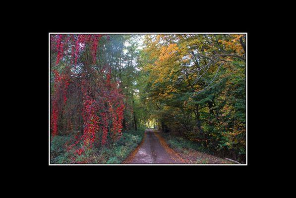couleurs d'automne 05