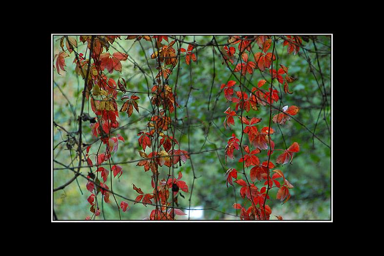 couleurs d'automne 06