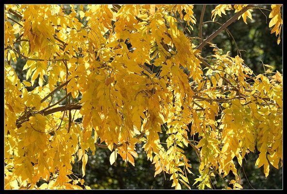 couleurs d'automne...
