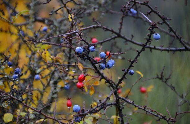 *couleurs de l'automne *