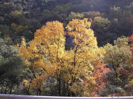 Couleurs de l'automne à Berga