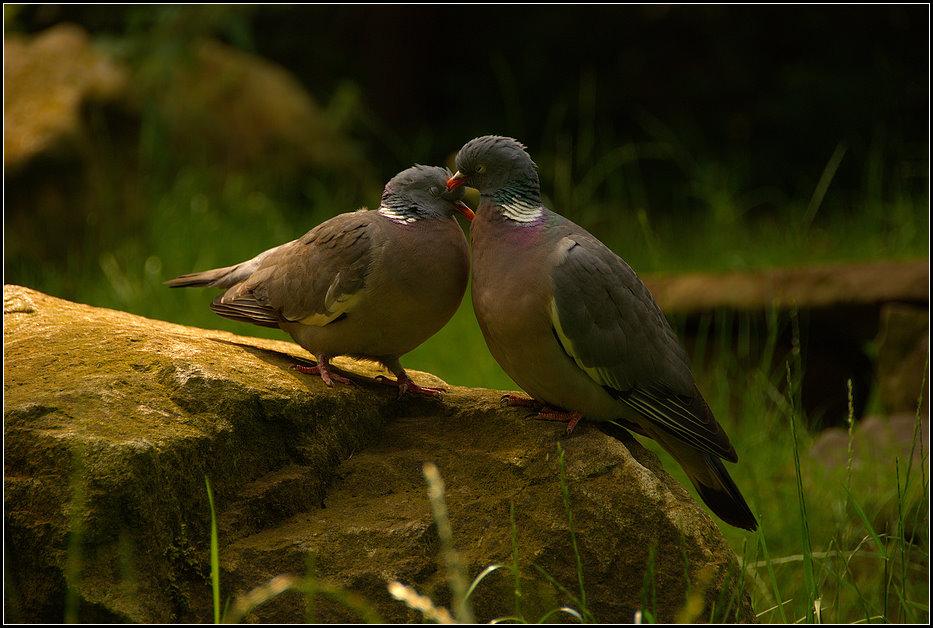 Couple d´amoureux