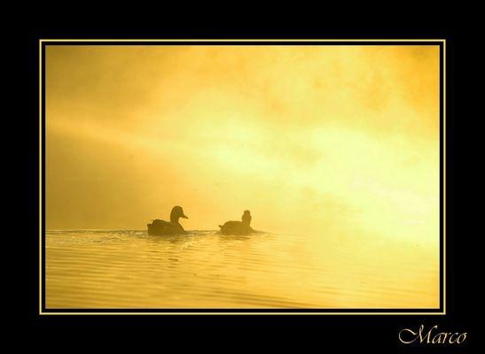 couple dans une brume d'or