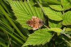 Couple de papillons nocturnes (la Doublure jaune)
