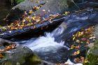 Courant d'automne