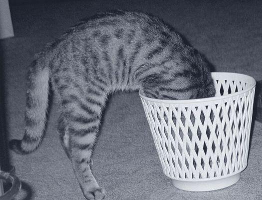 Couriosity killed the cat...
