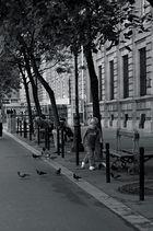 Courir après les pigeons