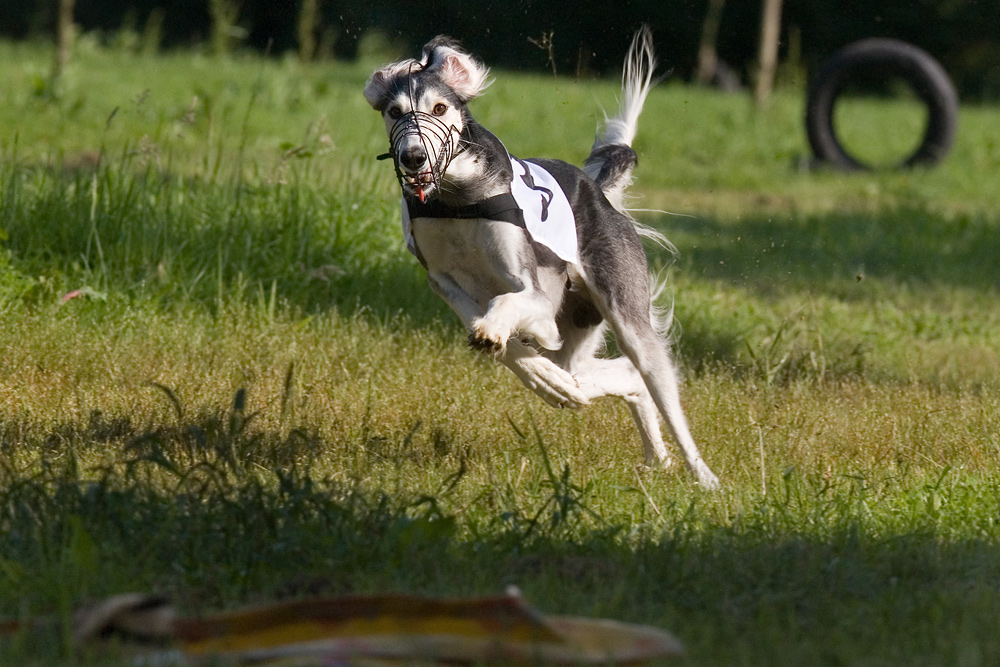 Coursing IV