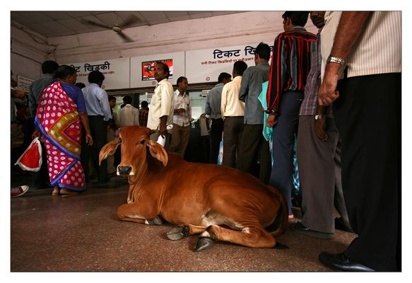 Cow in Khar Road Station Building | Mumbai, India