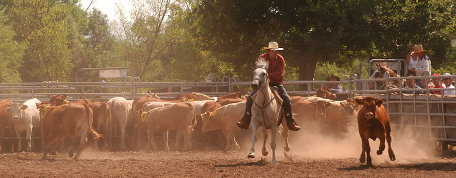 Cowboy #3