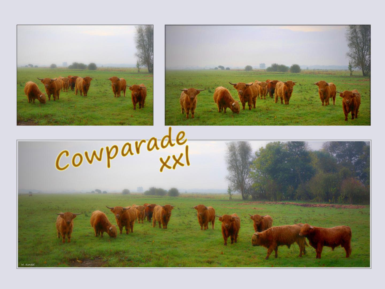 Cowparade - xxl