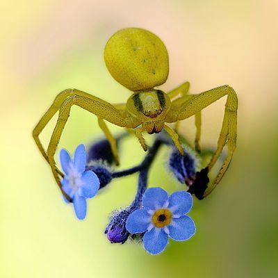 ...Crab spider...;-)