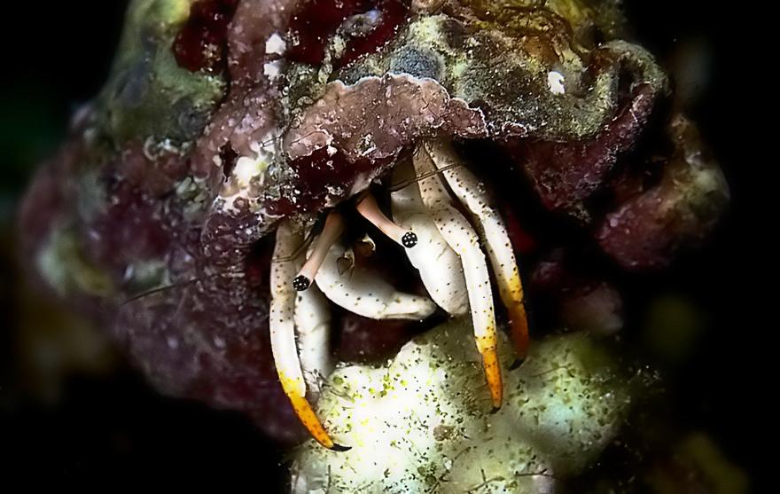 ...crab..indonesia...