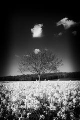Cracheur de nuage