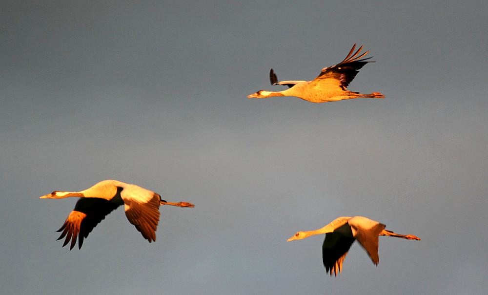 Crane sunrise 2