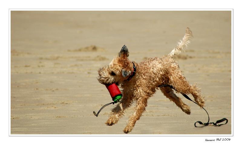 crazy dog ...