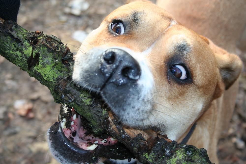 Crazy Dog =)