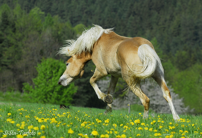 Crazy Horse ;-)