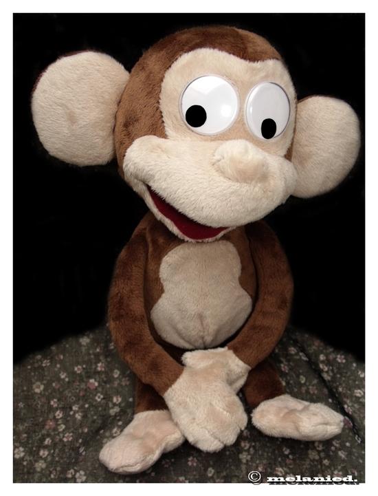 Crazy monkey is waiting