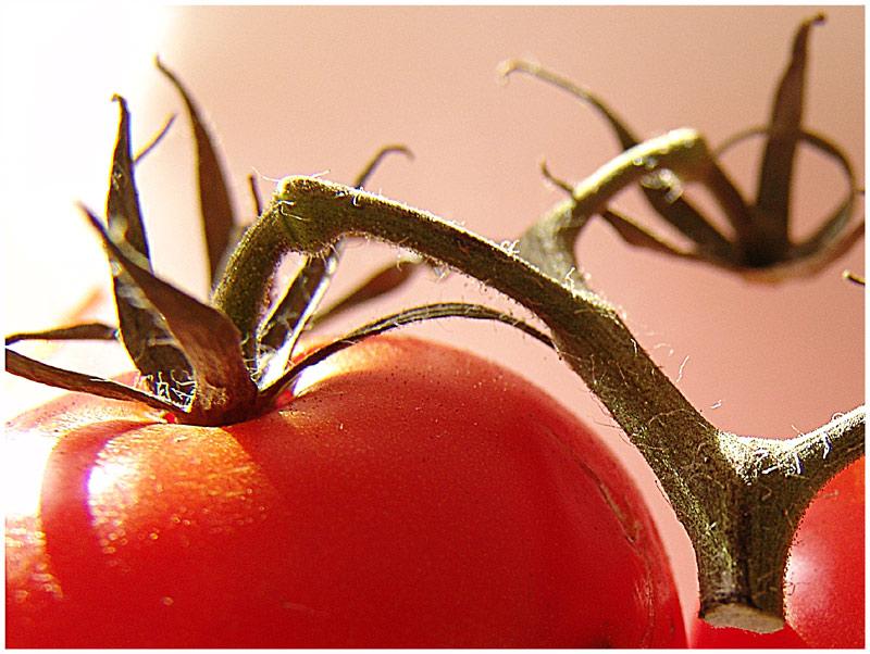 ::: crazy tomatoes II :::