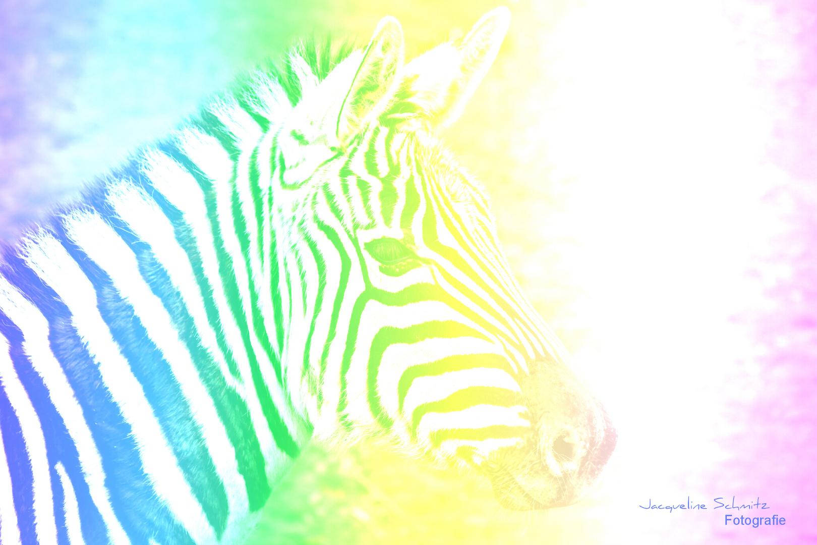 Crazy Zebra!