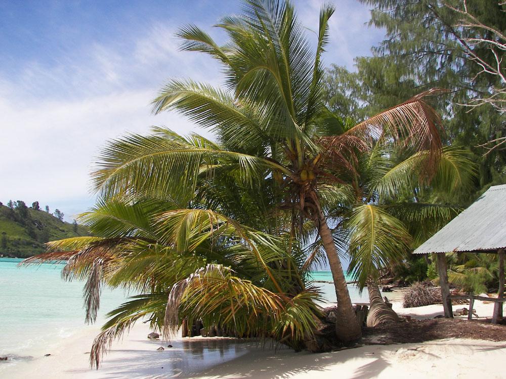 Cref Island Seychellen