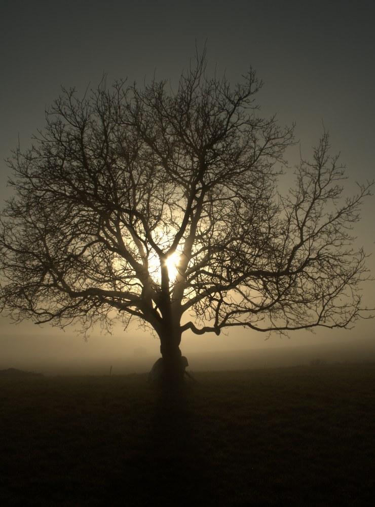 Crépuscule brumeux..